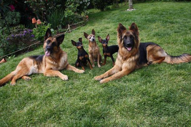 garde chien quimper