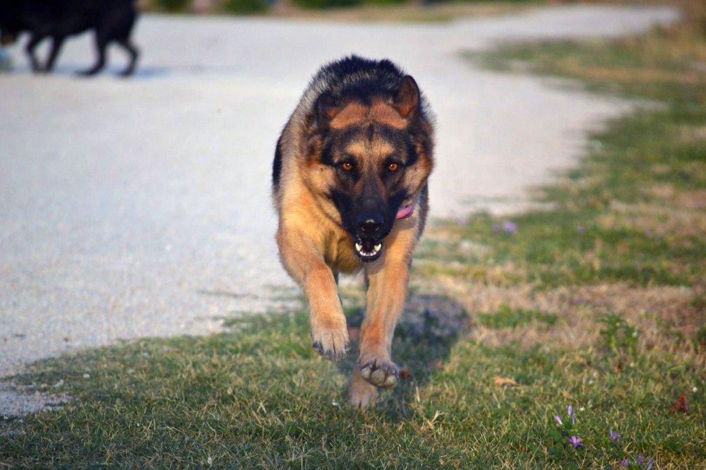 garde chien rhone