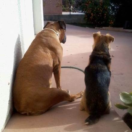 garde chien rivesaltes