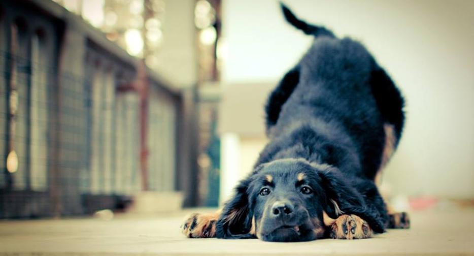 garde chien roquebrune cap martin