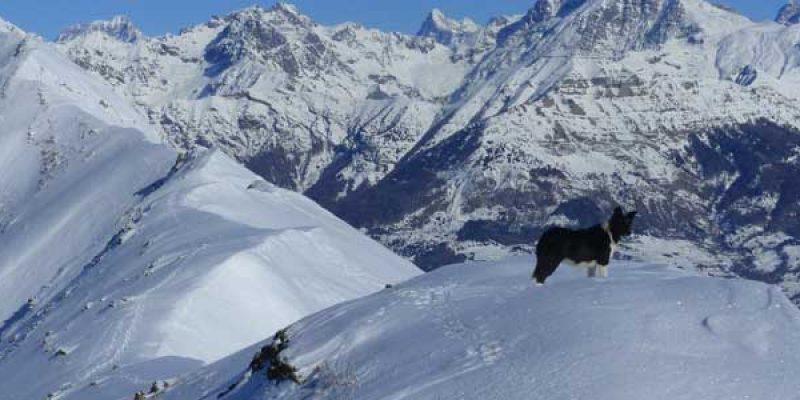 garde chien station ski