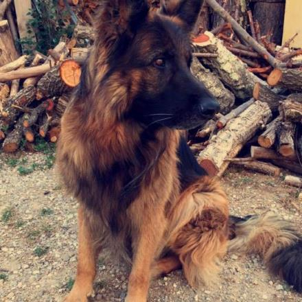 garde chien vidauban