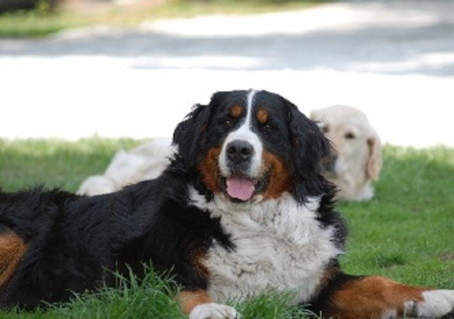 garde chien vincennes