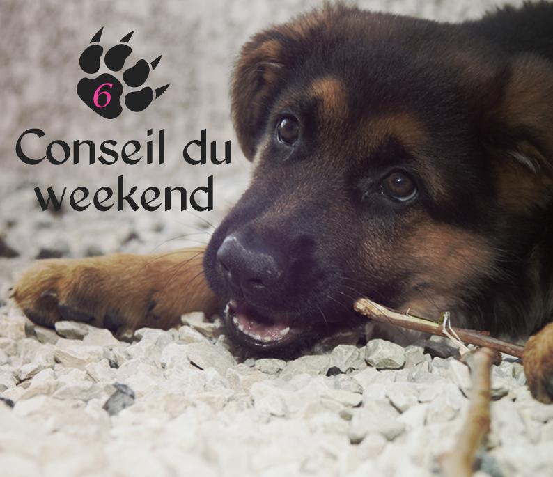 garde chien week end