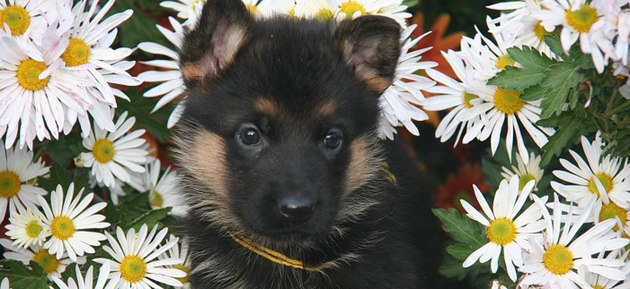 garde chien witry les reims