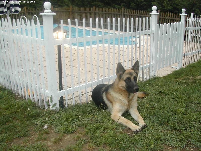 pension chien 38150