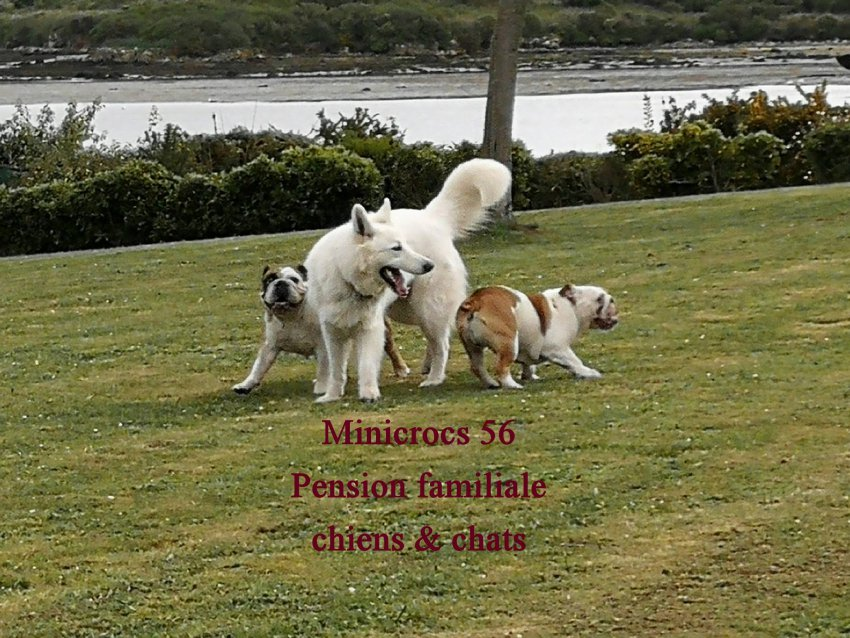 pension chien 56