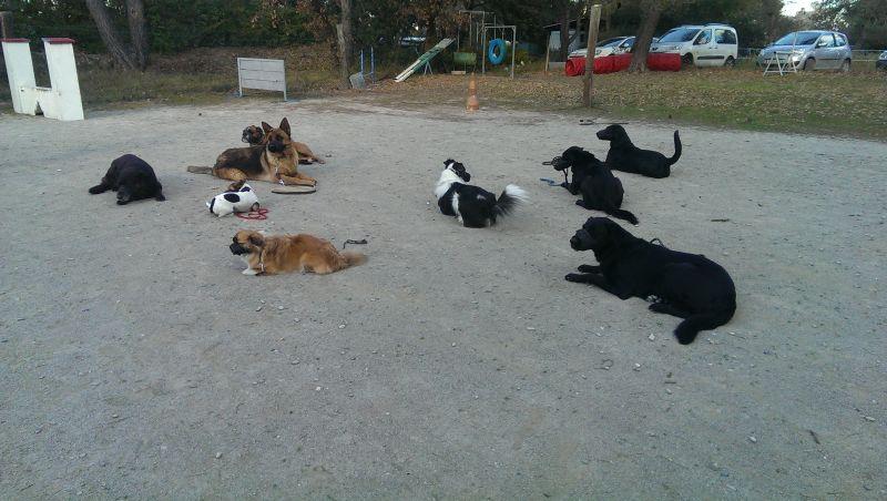 pension chien 58