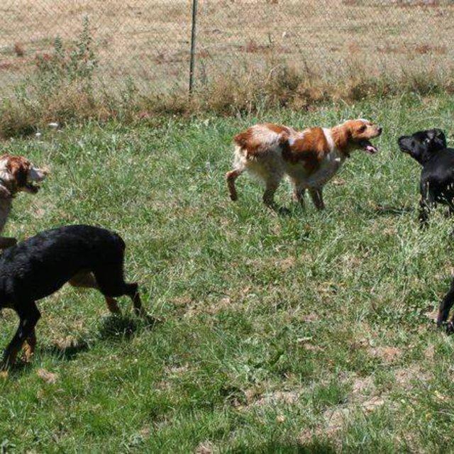 pension chien beziers