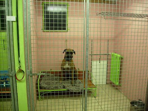 pension chien en liberte