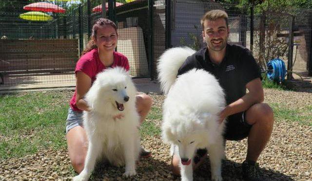 pension chien ger