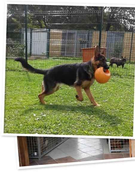 pension chien graulhet
