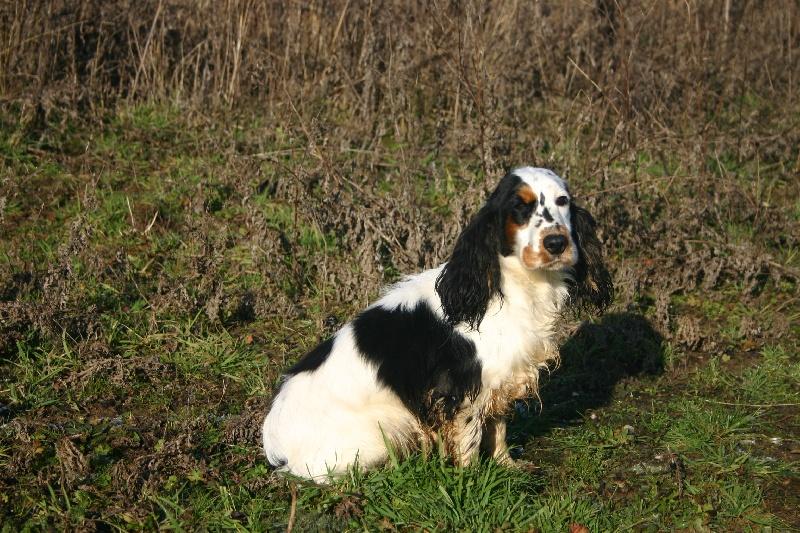 pension chien haillicourt