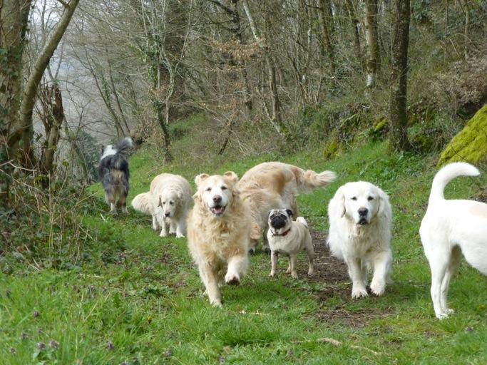 pension chien hauts de seine