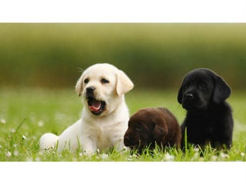pension chien itzig