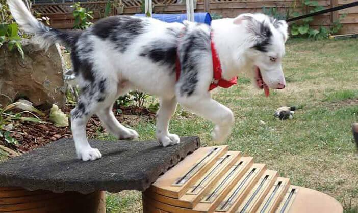 pension chien jorel