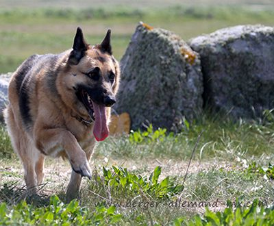 pension chien jura suisse