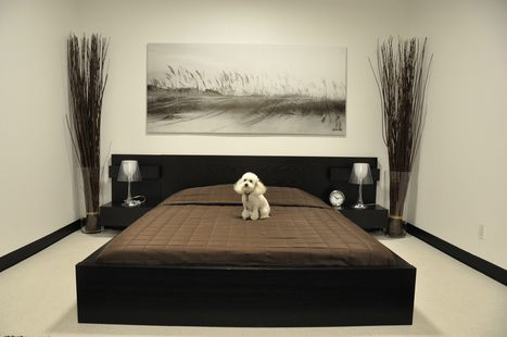 pension chien luxe