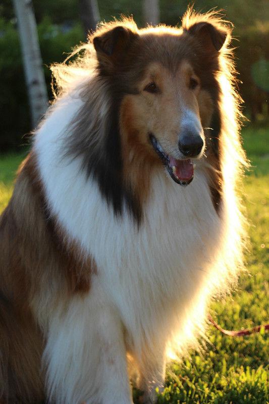 pension chien quebec kijiji