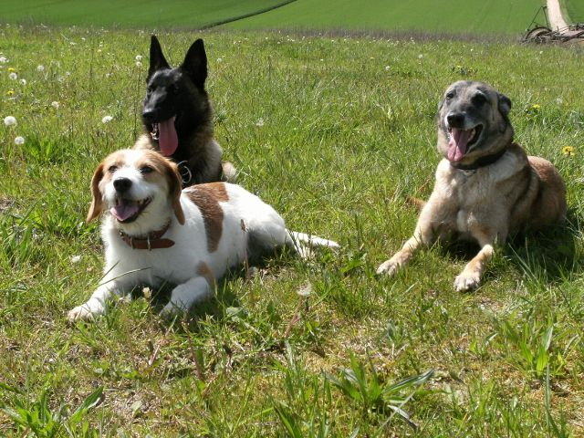pension chien quingey
