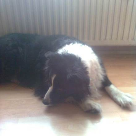 pension chien uccle