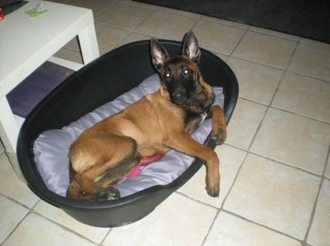 pension chien wimille