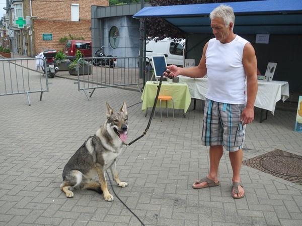 pension chien yvoir